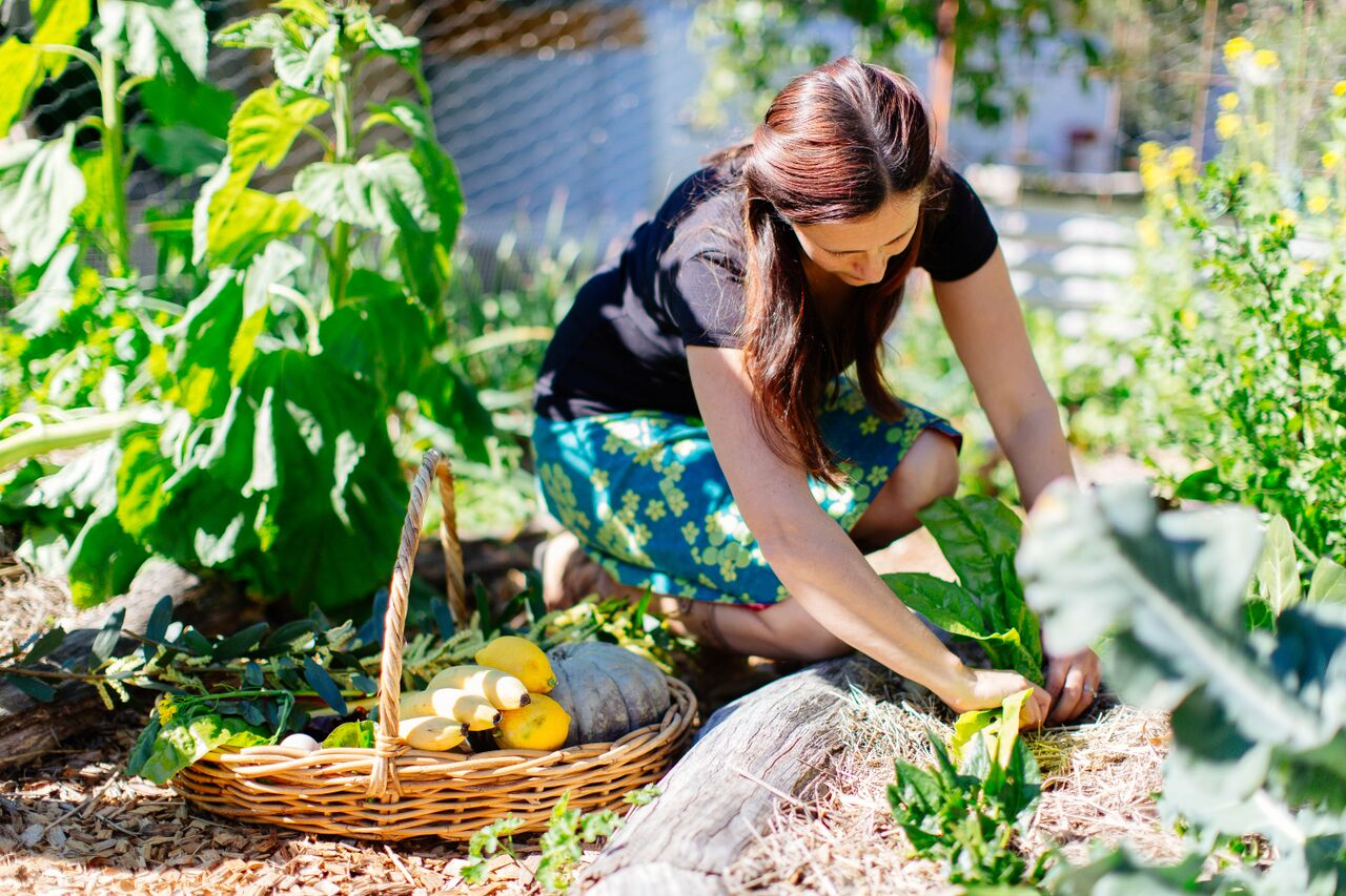 What Is Permaculture Garden
